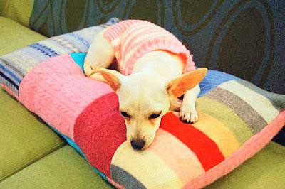 Como hacer una cama para mascotas cositasconmesh - Hacer camas para perros ...