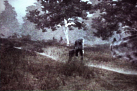 A photo of a strange creature in the woods outside Kingsmouth, Maine