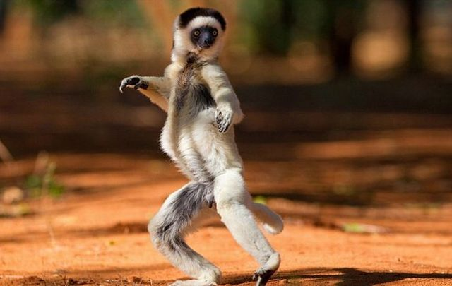 Funny Dancing Monkey Stills Amazing Images