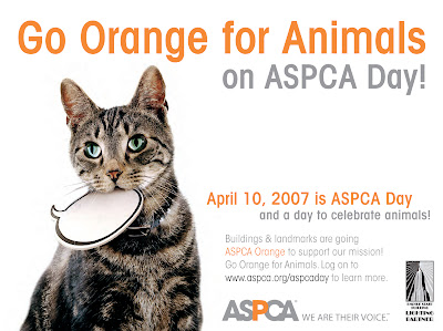 Aspca Stands For American Society The Prevention Of