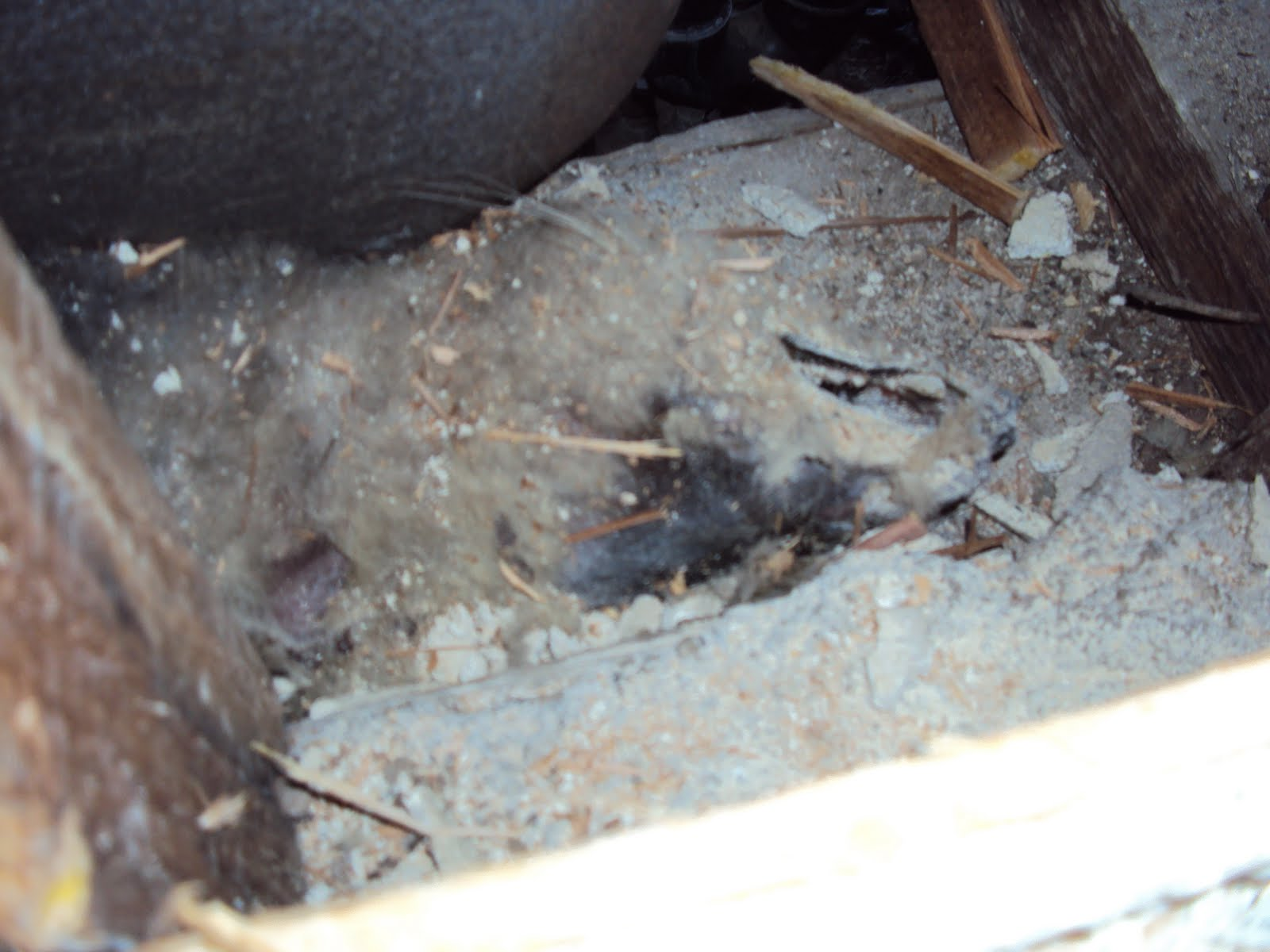 All City Animal Trapping Bad Smell In Your Attic Or Crawl