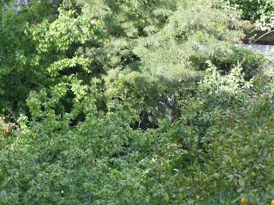 Ένας κήπος λιγότερος στη γειτονιά μας HPIM0133