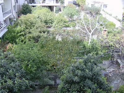 Ένας κήπος λιγότερος στη γειτονιά μας HPIM0138