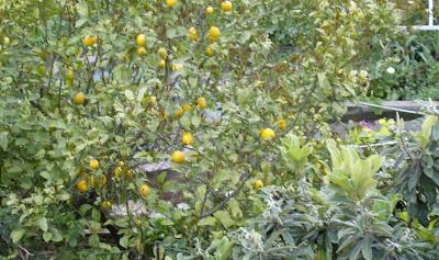 Ένας κήπος λιγότερος στη γειτονιά μας HPIM0136