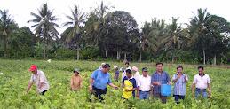 Panen Kacang Hijau bersama Dr. Ir. Gatot Irianto, Sang Direktur Air PLA Deptan