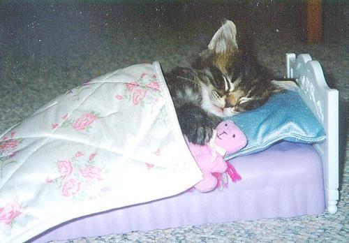مجلد كامل لهواة تربيه القطط kitten_bed_pink.jpg