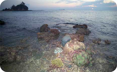 Stunning reefs are still found especially on undisturbed shores such as Raffles Lighthouse