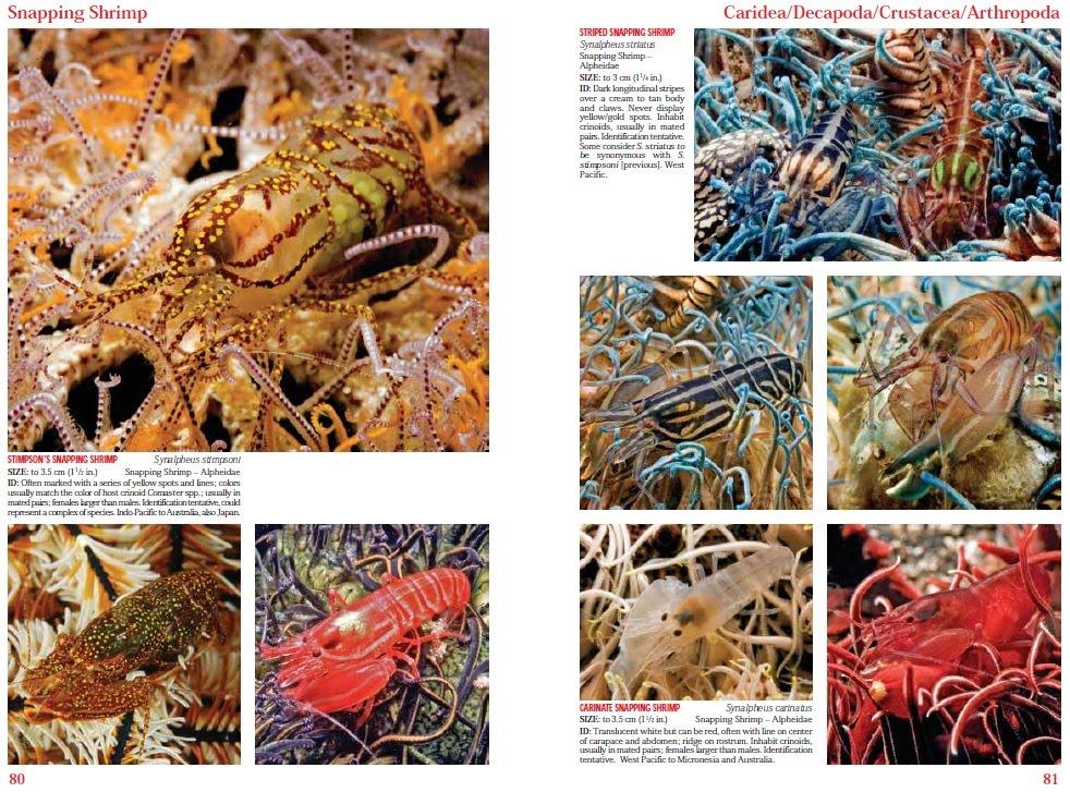 wild shores of singapore launch of reef creature identification