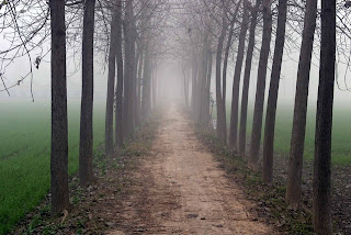 Fog Along A Wooded Trail