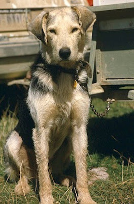 Woolshed 1 New Zealand Farm Working Dogs The Nz Huntaway