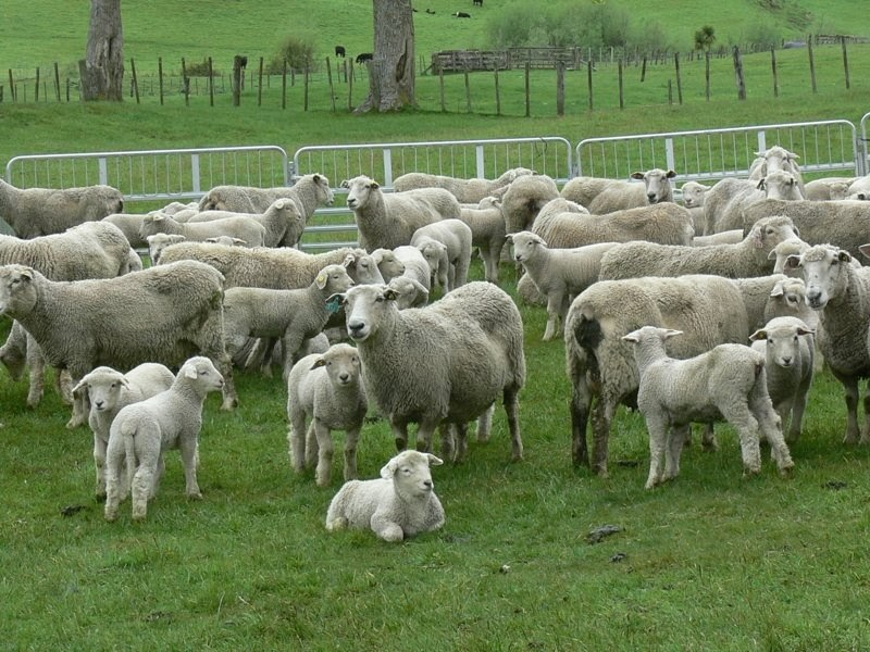 Woolshed 1: Farm Animal Reproduction - Basic Principles