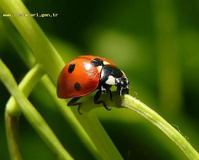böcek sınıfına giren hayvanlar ile ilgili görsel sonucu
