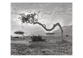 Exposición fotográfica en el Hotel Naturaleza de Rodalquilar