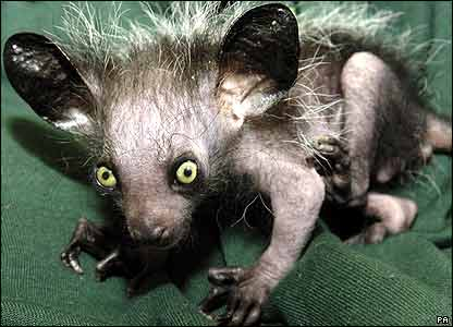 the aye aye in madagascar it pays Aye aye lemus this thing looks like golem  meet the 7 scariest animals on earth by harry  but instead of living in middle earth it lives in madagascar, .