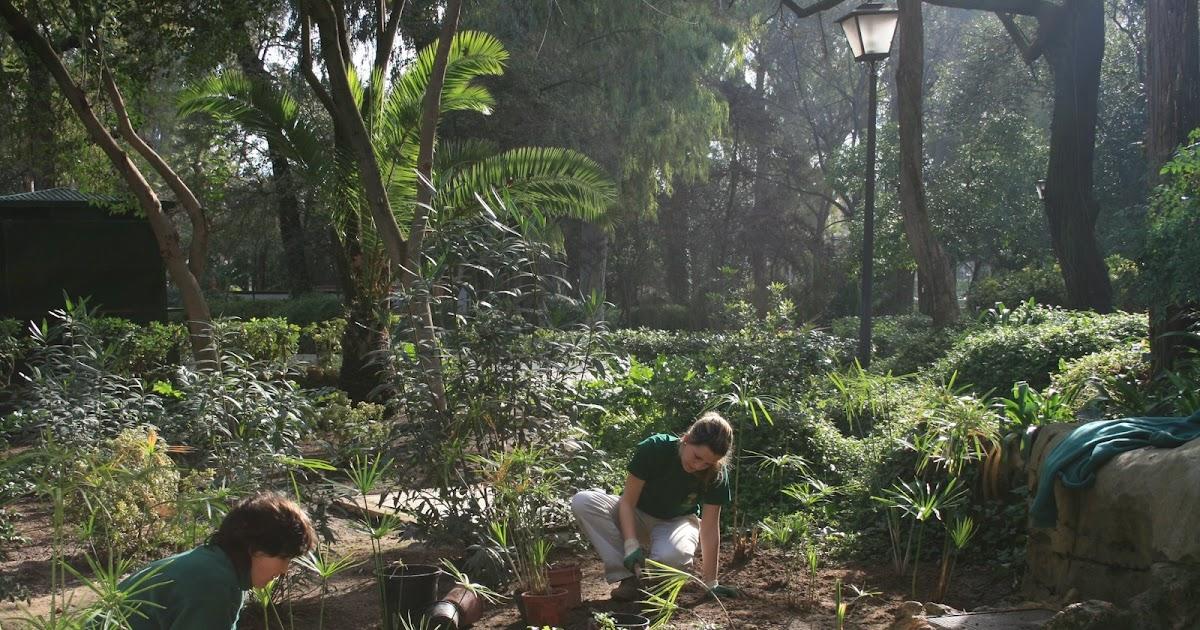 Escuela de jardiner a joaqu n romero murube monte gurug for Escuela de jardineria