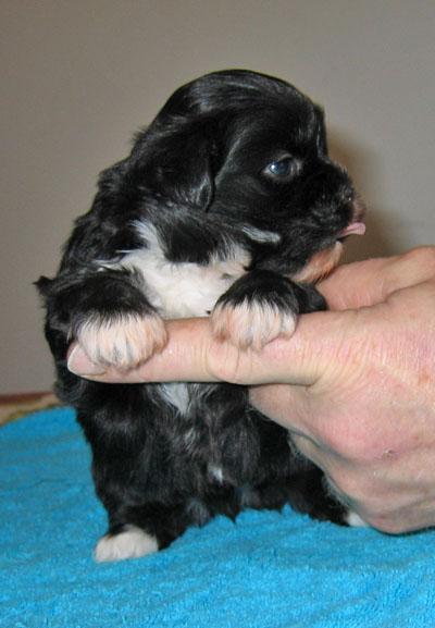 http://bp0.blogger.com/_WEuMuOJJl4M/R1C65KpKd2I/AAAAAAAAAQM/F4ii8N_8fhg/s1600-R/2007.Nov.29+Puppies+013.jpg
