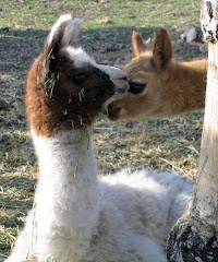CRIA GREETINGS