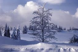 E' arrivata la prima neve!!!