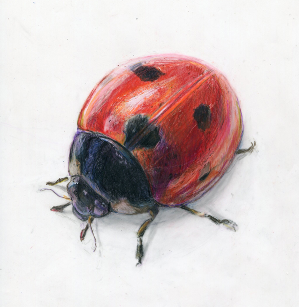 Realistic ladybug drawing - photo#31