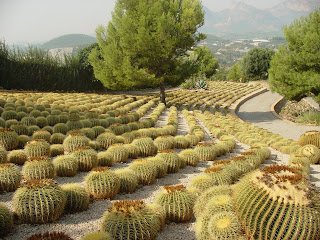 el jardn botnico de cactus dualgar inaugurado en julio del es un proyecto pionero en la comunidad valenciana y se encuentra situado en la