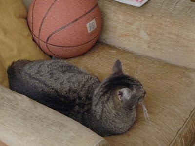 L'anima di :duepunti è sportiva (rospe, 2007)