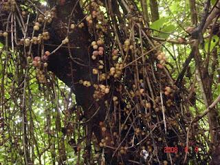 MiYzone: Mautam Famine in Chin Hills Myanmar