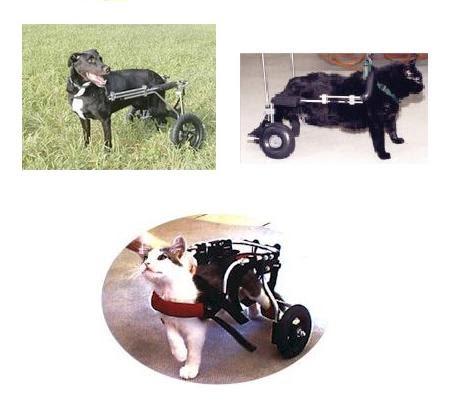 Gatos consentidos andaderas o sillas de ruedas for Sillas para perros