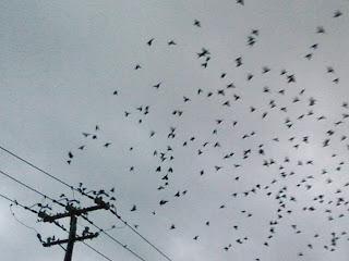 Birds_by_Sheila_Cunningham