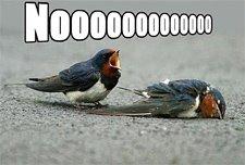 [bird-nooooooooooooo-dsf1.jpg]