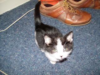 ニュージーランドの猫
