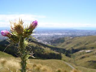 ニュージーランド クライストチャーチ 風景写真