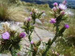 ニュージーランド 植物写真