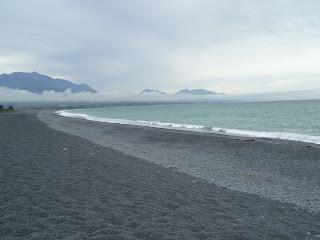 ニュージーランド 旅行 カイコウラ 写真 画像