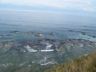 ニュージーランド カイコウラ クジラ イルカ アザラシ シャチ 画像 写真