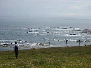 ニュージーランド クライストチャーチ カイコウラ 観光 旅行 写真
