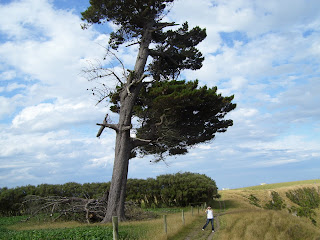 ニュージーランド 海外旅行 カイコウラ 観光 写真