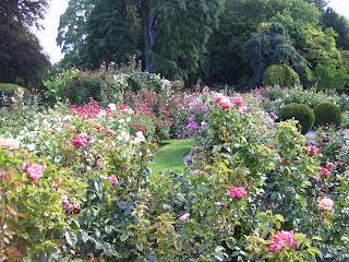 ニュージーランド クライストチャーチ 花 フラワー ガーデン 写真 画像