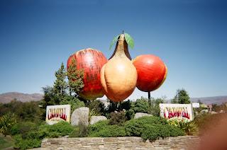 ニュージーランド オークランド クライストチャーチ 留学 海外旅行 写真 画像