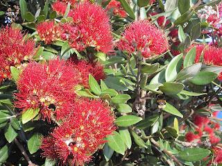 クライストチャーチ ニュージーランド 花 フラワー 写真 画像