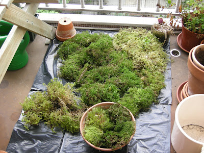 Extracting The Moss 5 Different Mosses