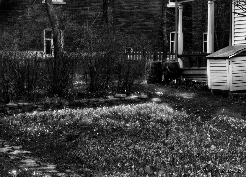 «Pour faire un jardin, il faut un morceau de terre et l'éternité...» Gilles Clément. Jardinier. Écrivain...