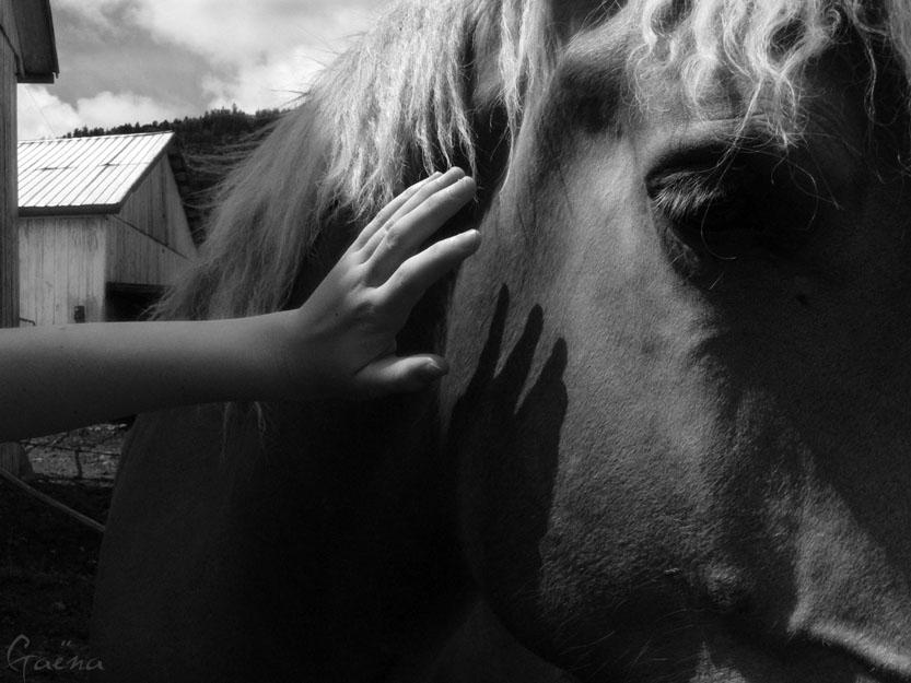 «L'air du paradis est celui qui souffle entre les oreilles d'un cheval.»