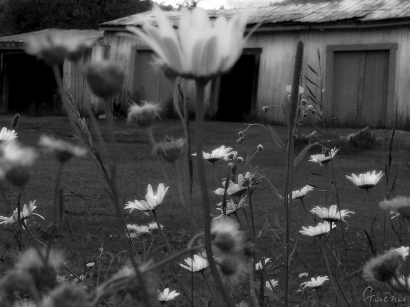 «Qui peut dire où vont les fleurs du temps qui passe? Qui peut dire où sont les fleurs du temps passé? Sur les tombes du mois de mai, les filles en font des bouquets... Quand saurons-nous? Un jour... Quand saurons-nous? Jamais...»