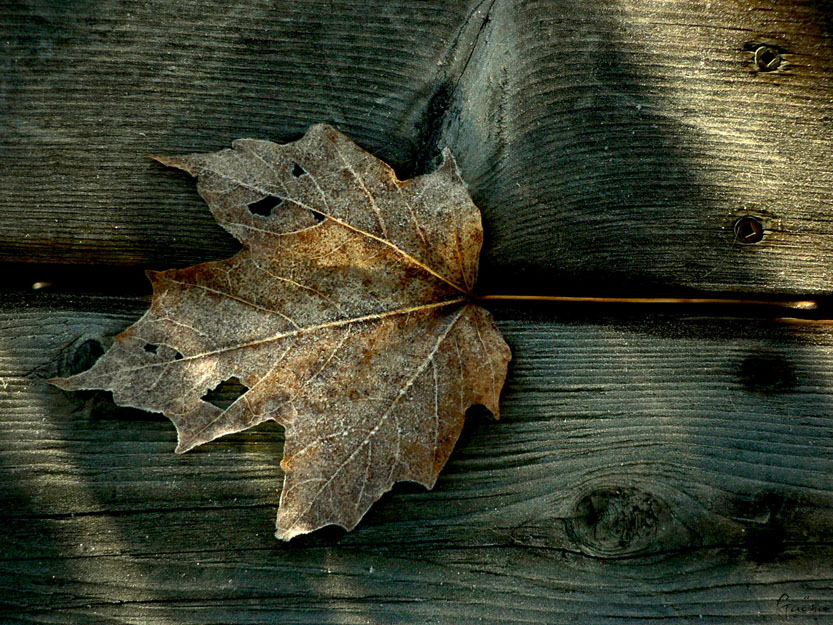 «No shadow, No stars, No moon, No care, November, It only believes, In a pile of dead leaves, And a moon, That's the color of bone...» Tom Waits...