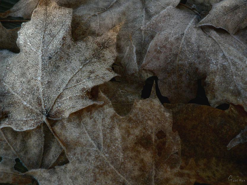«Sur la toile des frimas... Comme des voiles les feuilles dansent et clapotent sur le vêtement d'hiver...» Schawn...
