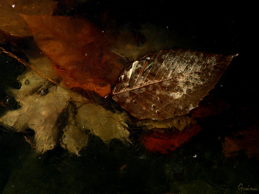 «...I hear him singing while he sits there in his chair, while these autumn leaves float around everywhere...»