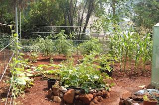 greenhouse_garden_tips_bulbs_fruit