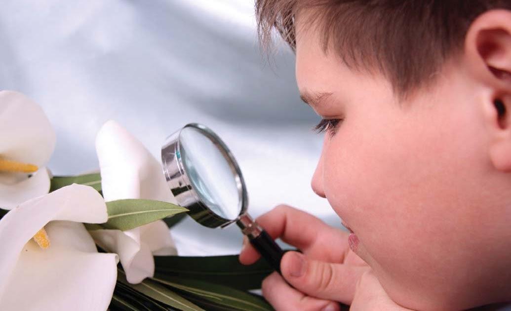 Montessori curriculum explained sciences materials for Childrens material