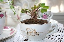 Min  pelargoniumsblogg