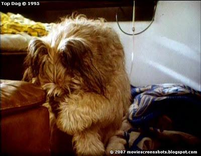 Vagebond S Movie Screenshots Top Dog 1995